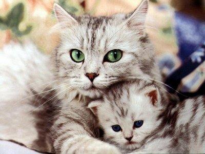 Who has cat genes?