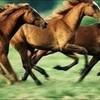 i love horses! plum-creek-girl photo