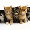 KITTIES amdow98 photo