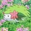 awsome pokemon shaymin simmy240 photo