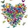 I ♥ butterflies peterslover photo