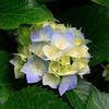 a pretty flower briarlight photo