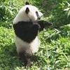 Kung Fu Panda mrsspencereid photo