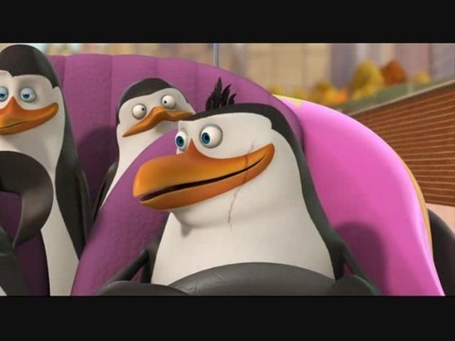 Rico The Penguin