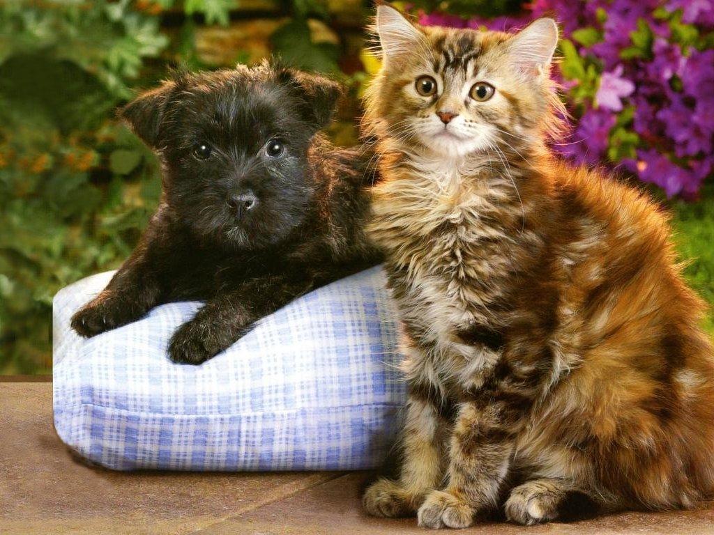 Kittens Puppies Teddybear64 Wallpaper 16751403 Fanpop