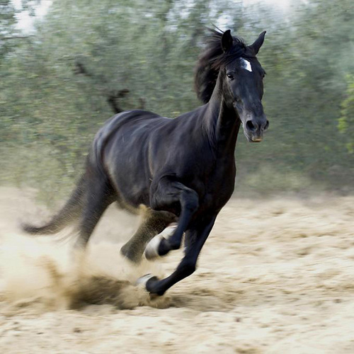 Beautiful cavalos