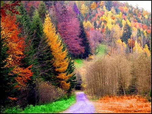 Colourfull Forest