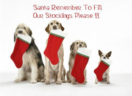 Santa Remember To Fill Our Stockings Please !