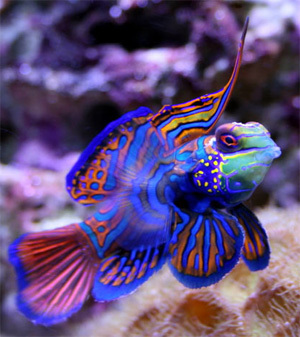 Bright Colored poisson