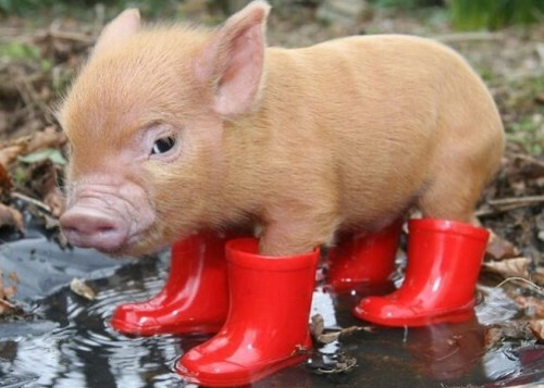 Don't forget u galoshes!