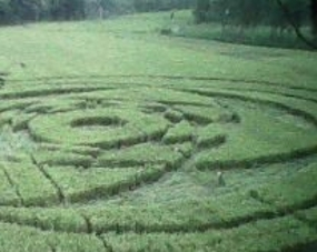 Crop Circle in Indonesia