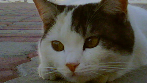 My Lovely Kitty (Fluffy) <3