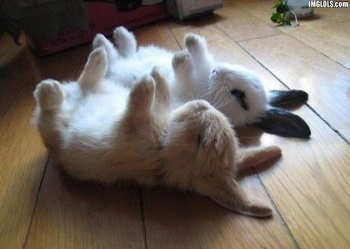 Bunnies Sleeping
