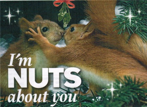 'I'm Nuts about You'