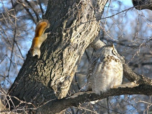 The Owl & the Squirrel sat in a tree...
