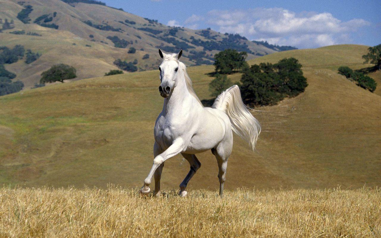 Beautiful Horse Horses Wallpaper 22410522 Fanpop Page 9