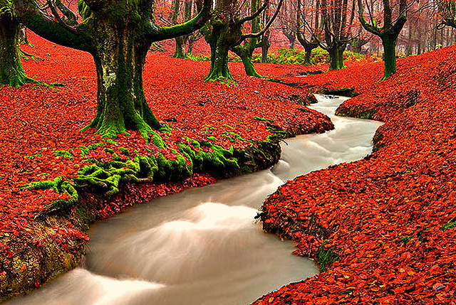 Beautiful Nature Images Fall Wallpaper And Background Photos