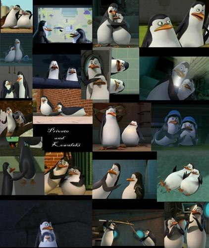 Private and Kowalski moments 2