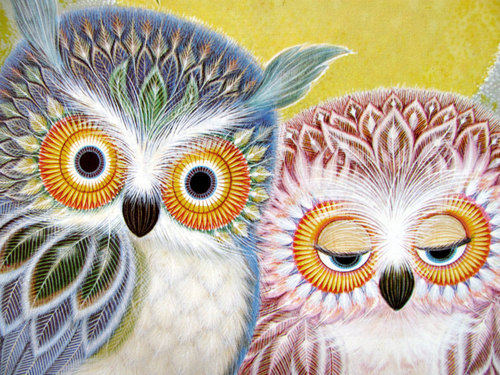 Owls by K. Chin